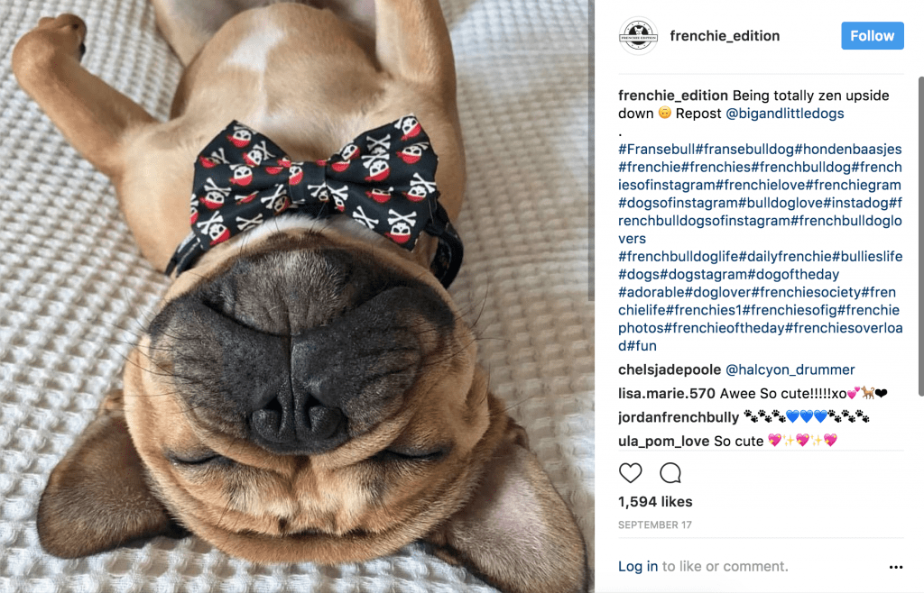 example of Instagram animal business post